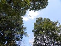 天空自由 库存图片
