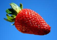 天空草莓 库存图片
