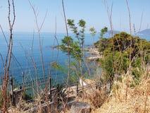 天空蔚蓝和海通过被看见的树 库存照片
