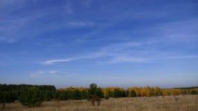 天空蔚蓝背景的秋天森林与小卷云的 时间间隔 在黄色的绿色松树边界 影视素材