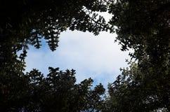 天空通过云杉分支的圈子  库存图片
