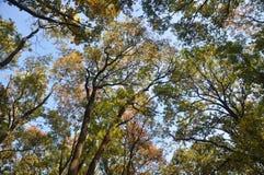 天空通过树梢 库存图片