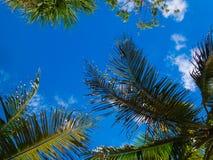 天空通过棕榈树 库存图片