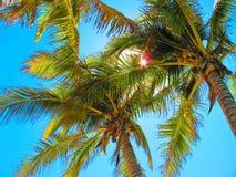 天空通过棕榈树 免版税库存照片
