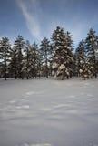 天空雪结构树冬天 免版税库存照片