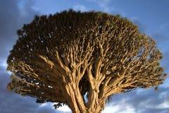 天空风雨如磐的结构树 库存图片
