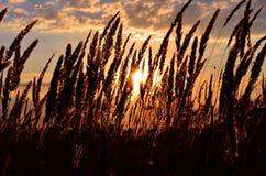 天空,云彩,太阳通过在日落的耳朵 免版税库存图片