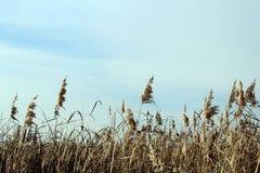 天空,植物 库存图片
