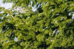 天空结构树 图库摄影