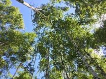 天空结构树 库存图片