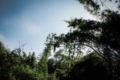 天空&树 图库摄影