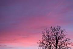 天空isn& x27; 总是青的t桃红色颜色 免版税库存图片