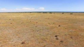 天线:在干草原的飞行与干燥植物 股票录像