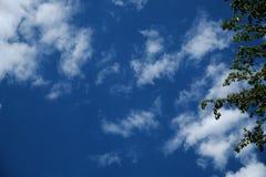 天蓝色和云彩与投掷从边的绿色叶子 免版税库存照片