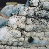 天蓝色岩石和帽贝 免版税库存照片