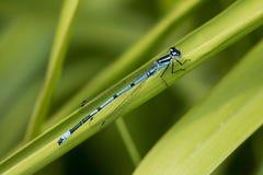 天蓝色的蓝色年轻女人飞行 图库摄影