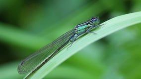 天蓝色的蜻蜓-宏指令 影视素材