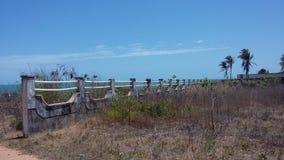 天蓝色自然树夏天海滩 库存照片