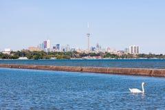 天鹅、安大略湖和多伦多全景 免版税库存照片