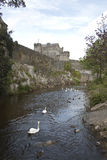 天鹅、鹅和鸭子在河Suir由Cahir防御 库存图片