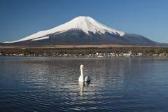 天鹅和富士山在山中湖,日本 库存照片