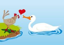 天鹅和母鸡在爱 免版税图库摄影