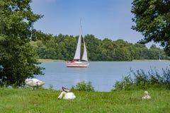 天鹅和游艇在湖 库存图片