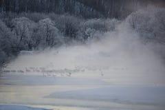 天鹅和起重机在薄雾 库存照片