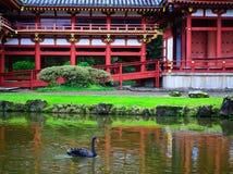 黑天鹅和Byodo在寺庙的池塘反射 库存照片