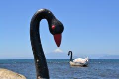 天鹅在有奥索尔诺火山火山的,巴塔哥尼亚湖 免版税库存图片