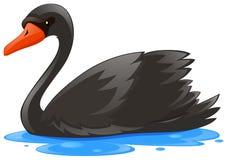 黑天鹅在水中 库存例证