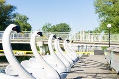 天鹅塑造了充电在栈桥的小船在湖附近 免版税库存照片