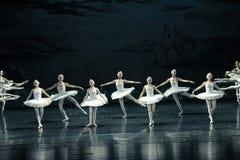 天鹅家庭芭蕾天鹅湖 免版税库存照片