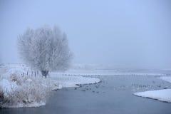 天鹅栖所在冬天 免版税库存照片