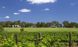 天鹅河葡萄园,西澳州 图库摄影