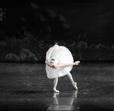 天鹅游泳芭蕾天鹅湖 库存照片
