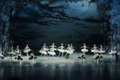 天鹅湖芭蕾天鹅湖早晨这为时场面的天鹅湖  免版税图库摄影