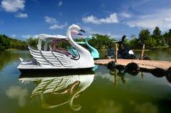 天鹅漂浮在湖的水自行车 库存照片