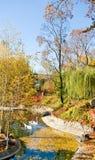 天鹅的图象在公园 免版税库存照片