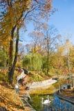 天鹅的图象在公园 库存图片