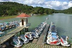 天鹅脚蹬小船在公园 免版税库存照片
