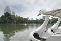 天鹅脚蹬小船在池塘 免版税库存照片