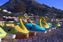 天鹅脚蹬小船在的喀喀湖的,玻利维亚科帕卡巴纳 免版税库存照片