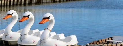 天鹅脚蹬小船 免版税图库摄影