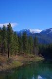 天鹅范围,扁平头的国家森林 免版税库存图片