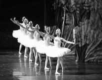 天鹅队列芭蕾天鹅湖 图库摄影