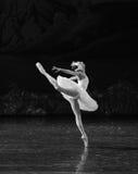天鹅飞行芭蕾天鹅湖 免版税库存图片