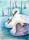 天鹅-三只天鹅原始的水彩绘画在湖的 免版税库存照片