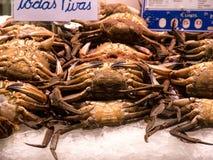天鹅绒螃蟹 免版税图库摄影