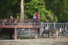太平动物园 库存图片